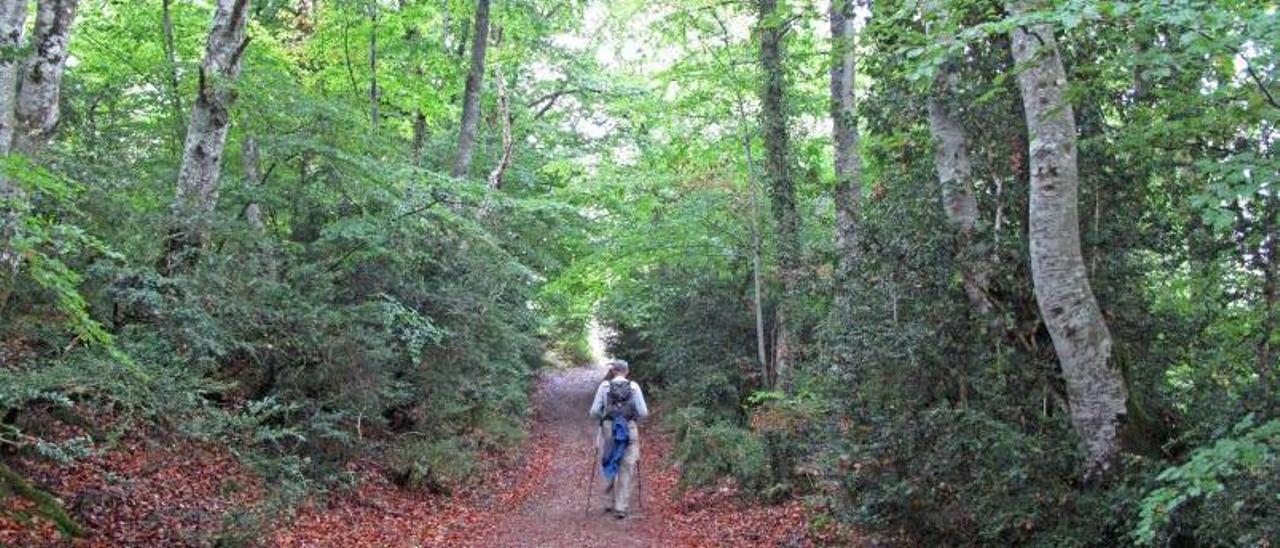 Un senderista en un monte en el entorno de Vigo.