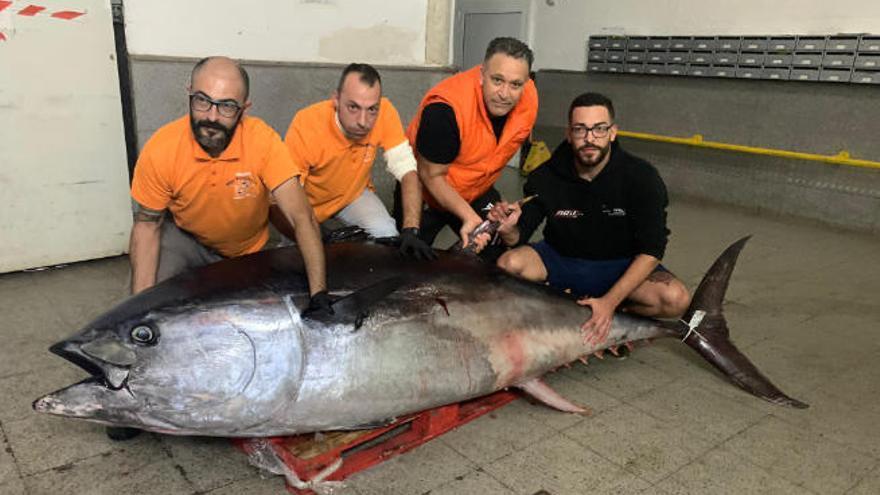Llegan al Mercado Central dos grandes atunes rojos