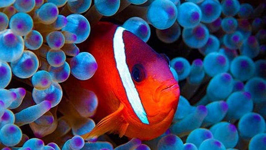 El océano secreto de Jean-Michel Cousteau