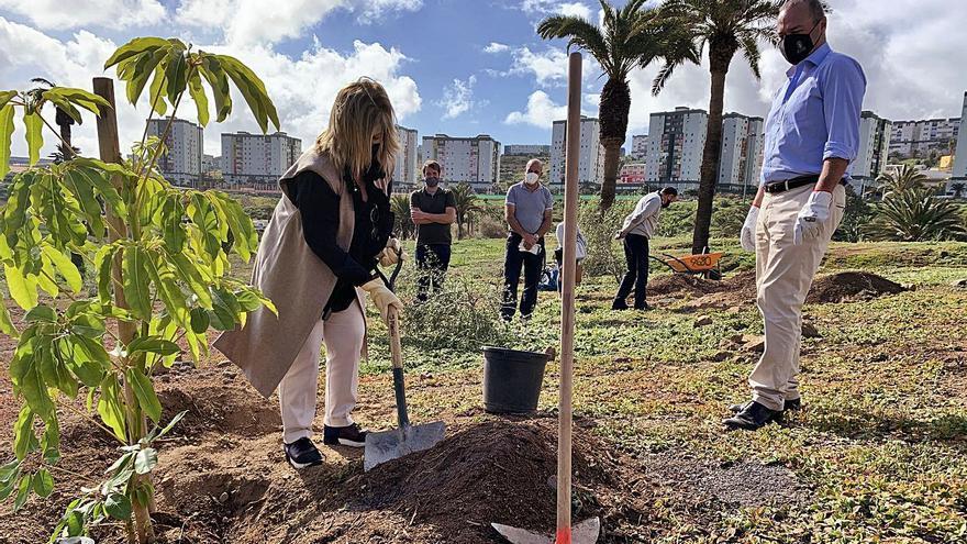 """El Ayuntamiento incrementa  la """"mancha verde"""" de la capital con 2.800 ejemplares de árboles"""