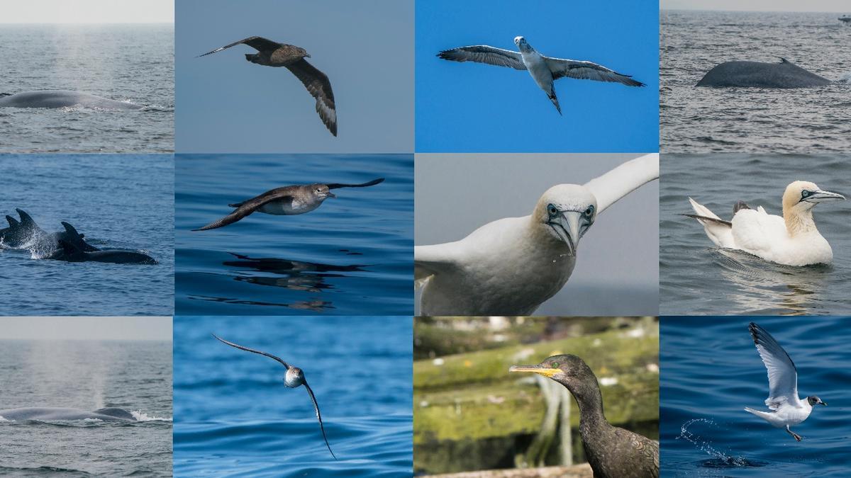 Algunas de las aves y mamíferos marinos avistados desde el aula de naturaleza flotante que es el barco Chasula.