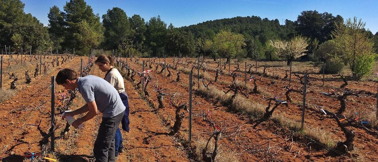 Técnicos de Aquactiva, en una explotación de viñedos de la provincia de Valencia