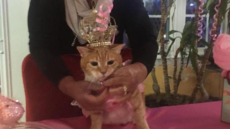 15 personas infectadas de coronavirus tras acudir a la fiesta de cumpleaños de un gato
