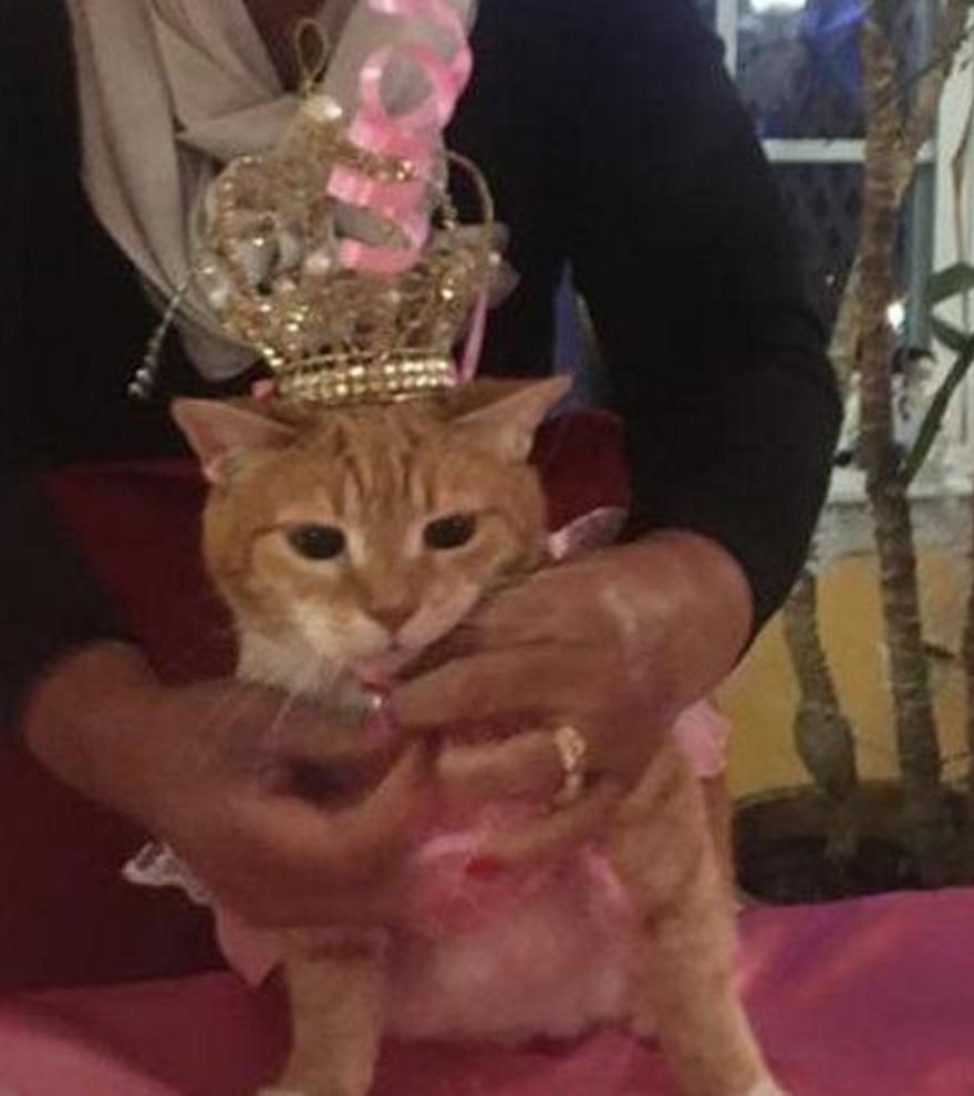 La fiesta de cumpleaños de un gato en Chile acaba con 15 infectados de coronavirus