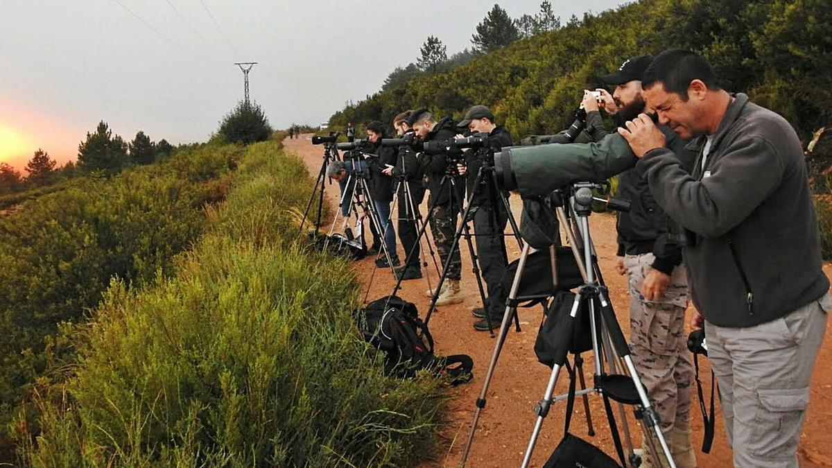 Un grupo de personas en plena observación del lobo en la sierra de La Culebra. | P. Martín