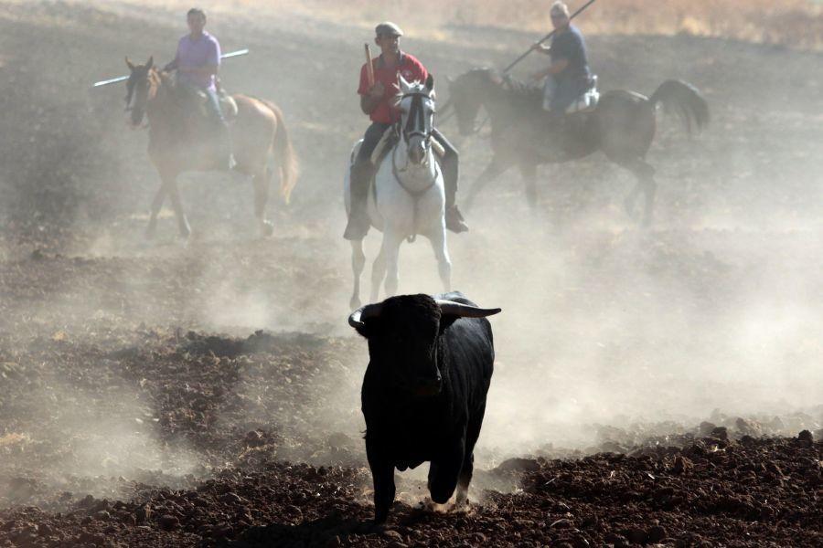Fiestas en Zamora: Encierro en El Pego