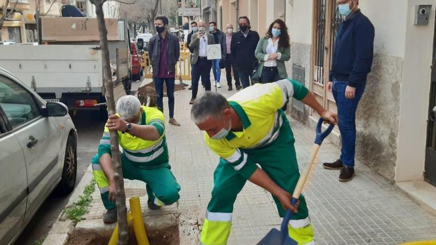 Die Stadt wird grüner: 2.000 neue Bäume für Palma de Mallorca
