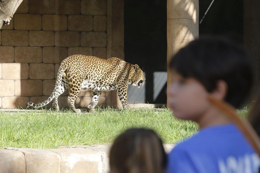 Reapertura del Zoológico tras el estado de alarma