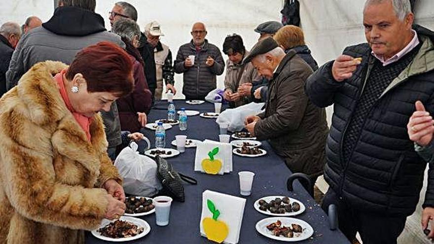 Degustación de castañas en Abegondo