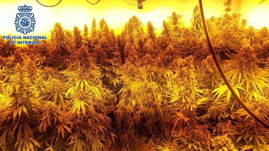 Desmantelado un cultivo de marihuana en una vivienda social de Churriana