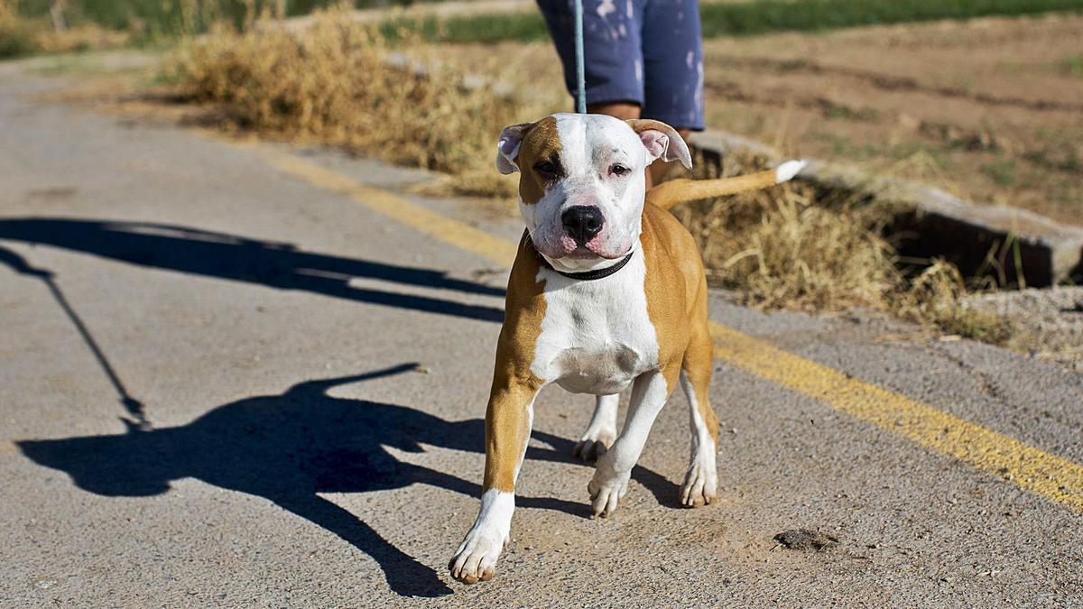 Un perro, paseando con su persona responsable. El término amo o dueño ya no es adecuado según la futura ley.