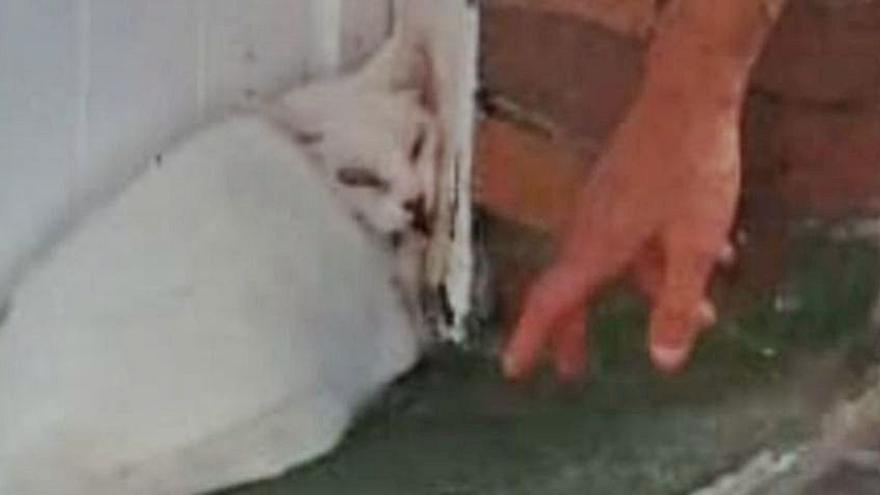 La Policía rescata a un gato que había caído desde un balcón en Moaña