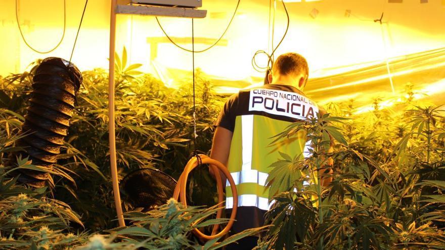 Incautan 2.000 kilos de marihuana y detienen a 137 personas en Valencia
