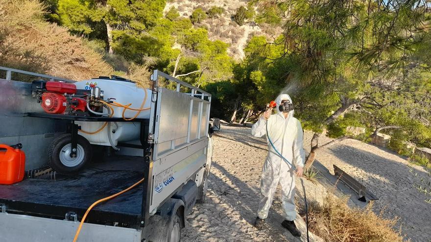 Fumigación contra la procesionaria en las pinadas de Alicante