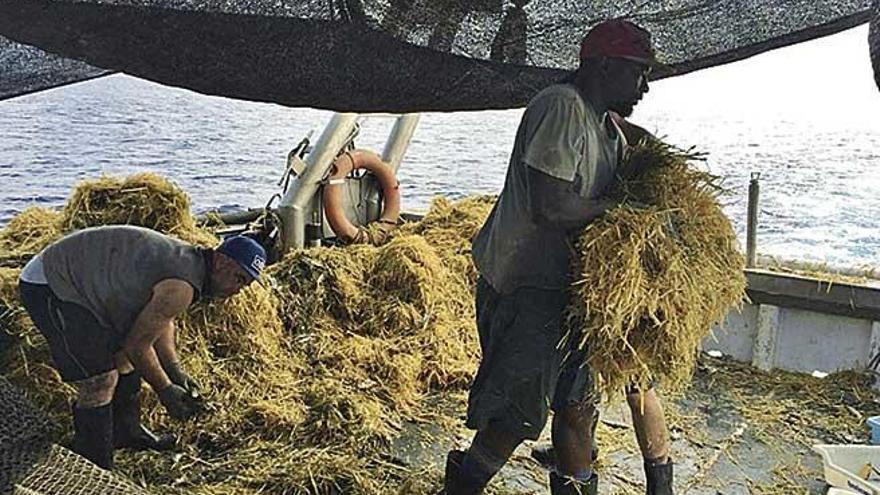 Strohballen stören Fischfang auf Mallorca