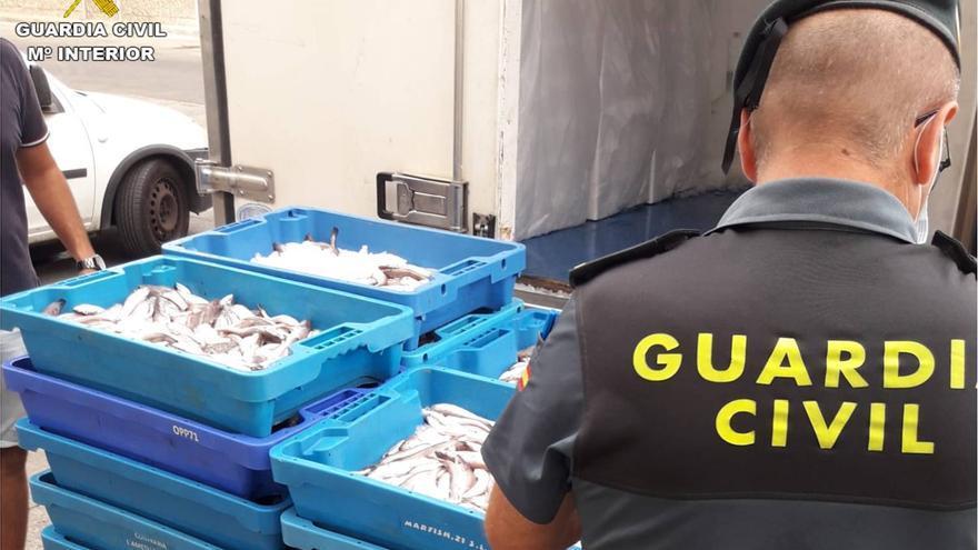 La Guardia Civil interviene media tonelada de pescado ilegal en Alicante, Santa Pola y Altea