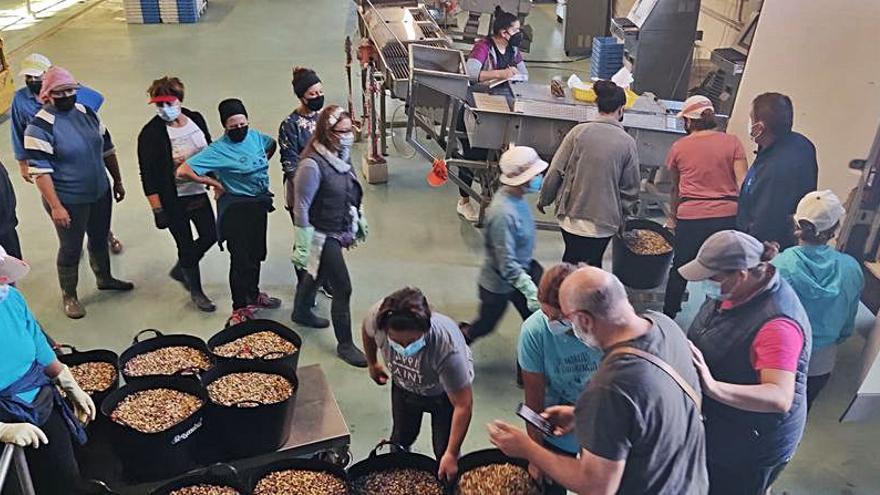 La Cofradía de A Illa invierte 30.000 euros en una resiembra de almeja de hasta 18 milímetros