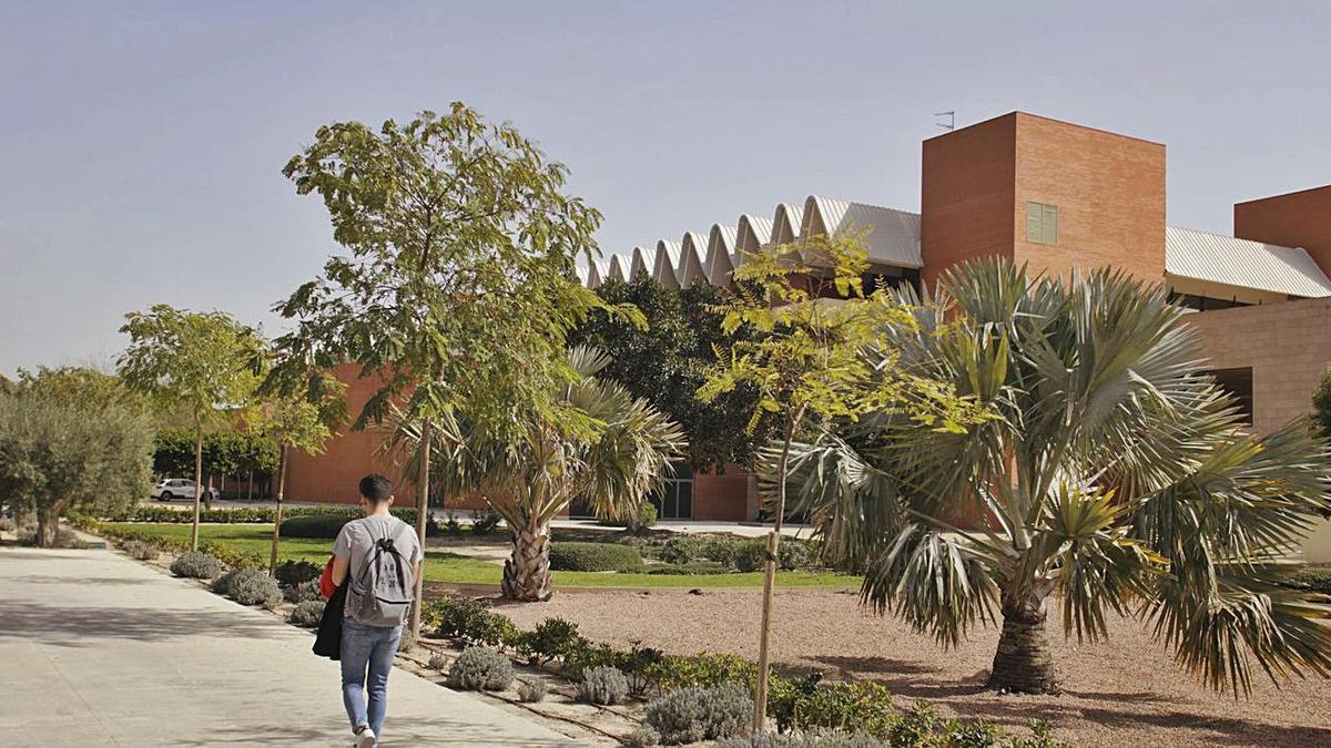 Un joven pasea por el campus de Elche de la Universidad Miguel Hernández. | SERGIO FERRÁNDEZ