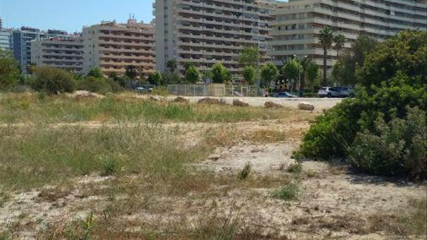 Calp plantará nogales, álamos o tilos en las zonas urbanas degradadas