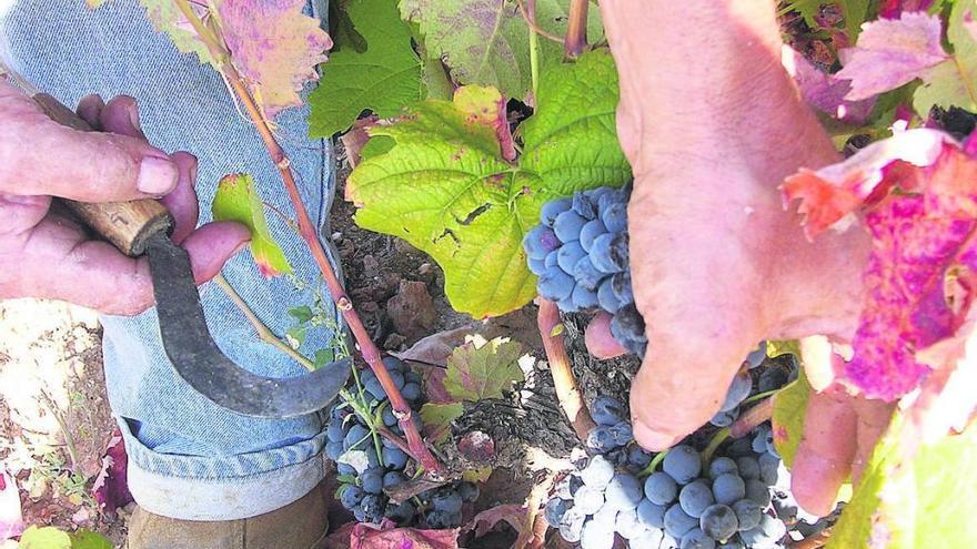 La DO Arribes consigue 90 o más puntos en 19 vinos para la Guía Peñín 2020