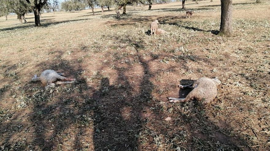 El granizo del martes dejó daños por 1,5 millones en Córdoba, Jaén y Sevilla