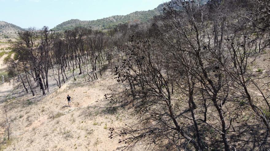 La sierra de la Zafra en Monóvar sigue devastada un año después del incendio