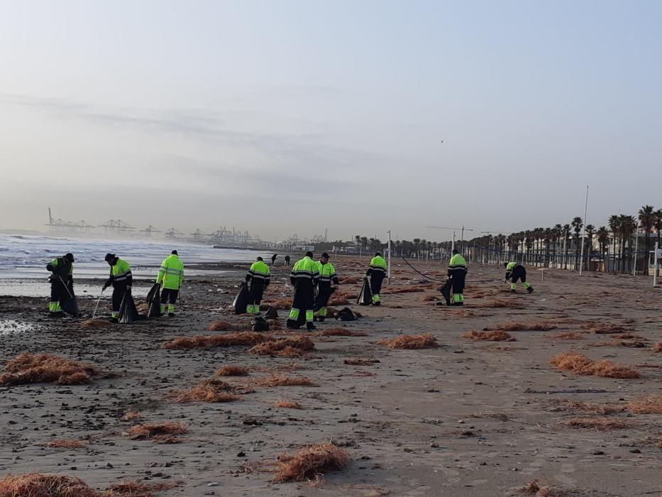 Varios operarios limpian la playa de la Patacona.