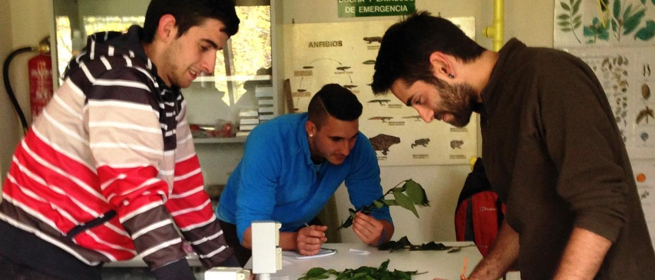 Alumnos de enseñanzas forestales de Tineo, en una imagen de archivo