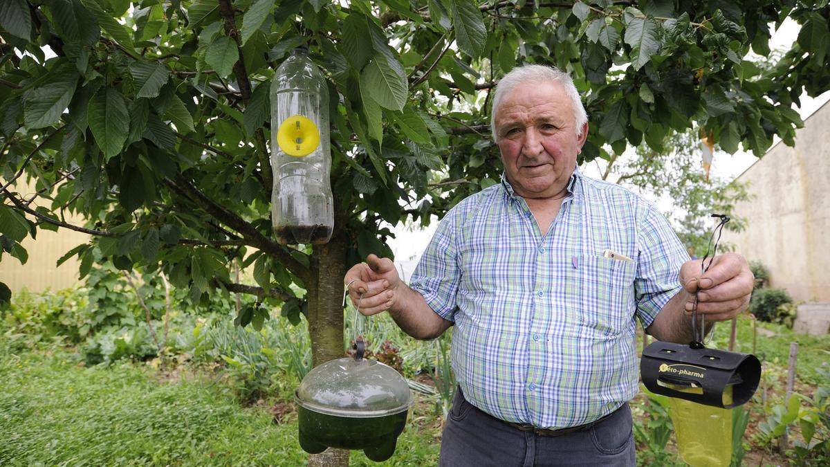 Antonio Iglesias, un vecino de Vilatuxe, en una imagen de archivo con trampas para reinas de Vespa velutina.//Bernabé/Javier Lalín