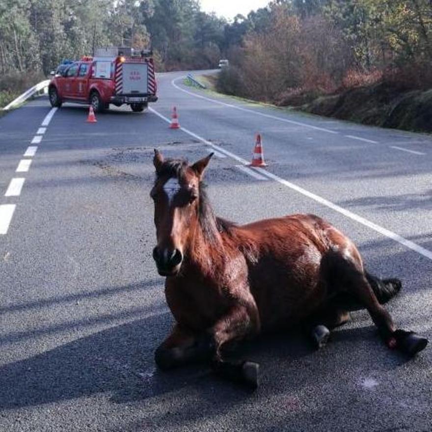Un caballo atropellado hace años en San Cibrán.