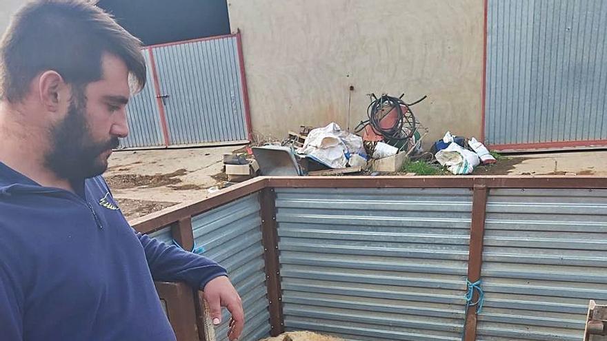 """Un ganadero de Zamora tras un ataque de lobos: """"Se me quitan las ganas de seguir con esto"""""""