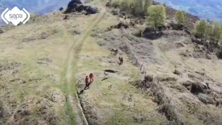 Los Bomberos de Asturias rescatan un potro de un hoyo en el Monsacro