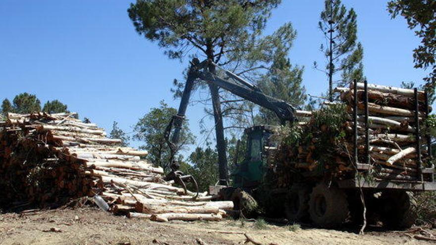 La Biblioteca de Roses divulga «La biomassa forestal i agrícola a Catalunya»