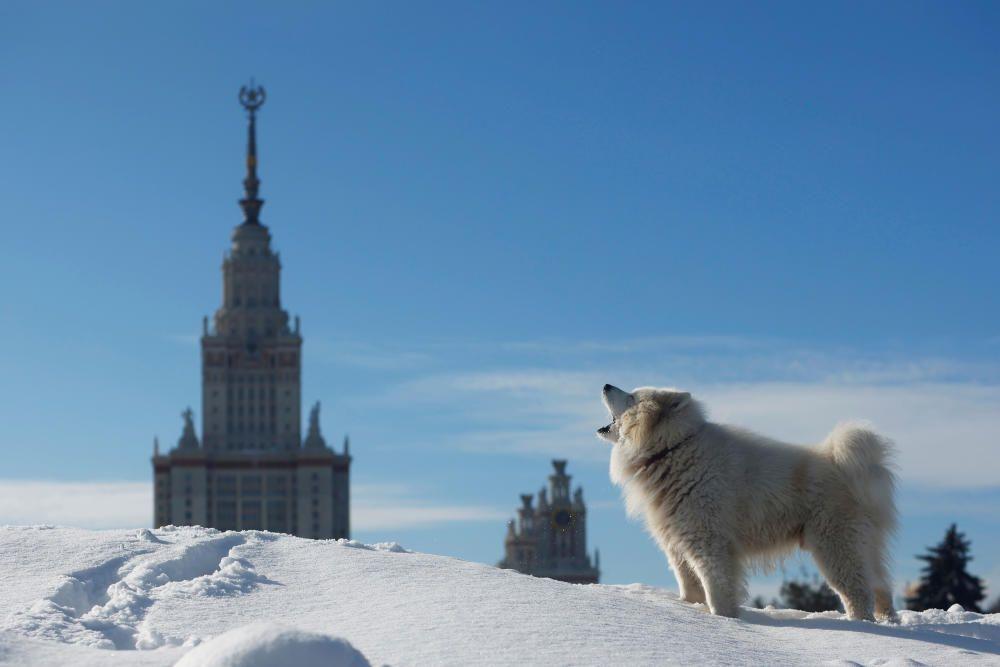 Un perro frente a la Universidad de Moscú.