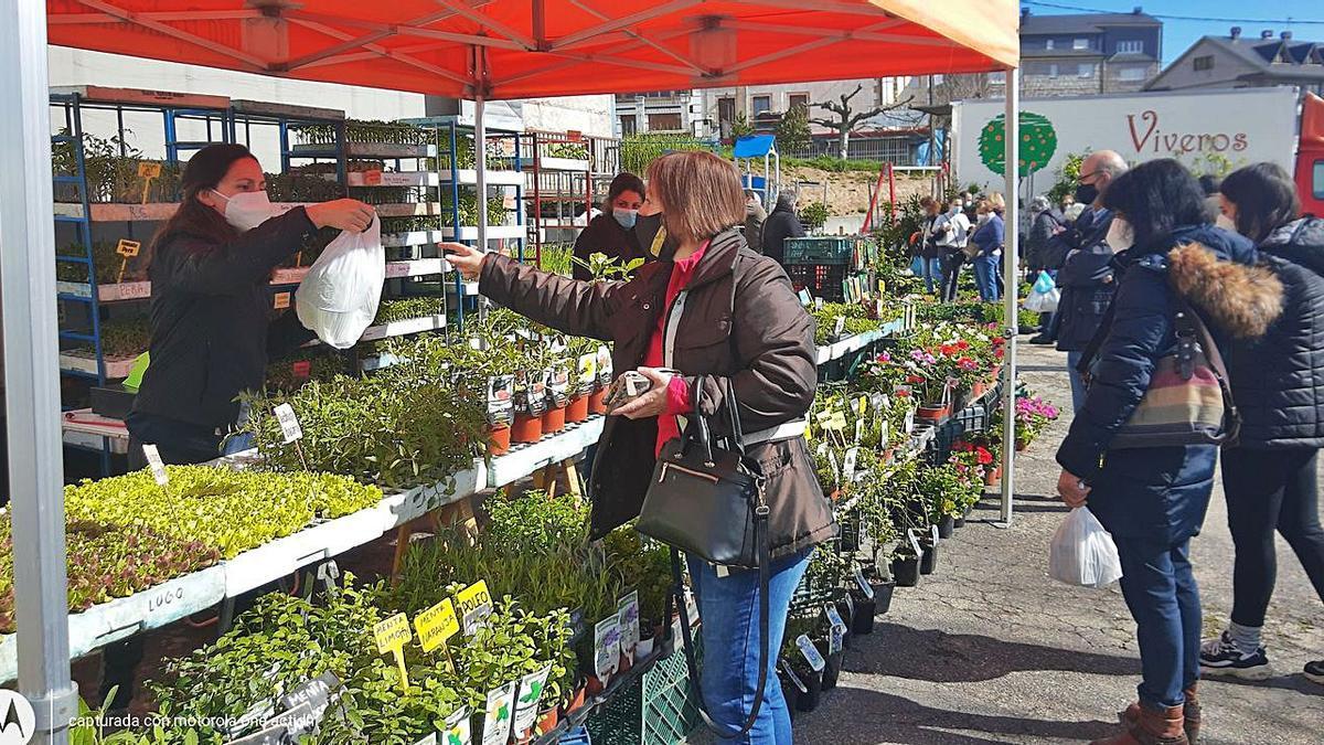 Venta de plantones, ayer en el mercado de El Puente de Sanabria. | Araceli Saavedra
