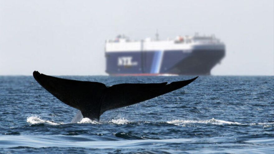 Ruido submarino: otra amenaza para la vida en los océanos
