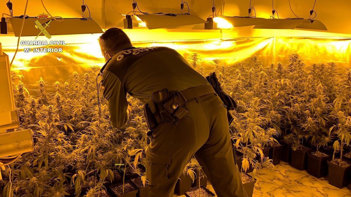 Dos detenidos por cultivar marihuana en una vivienda de Villa del Campo