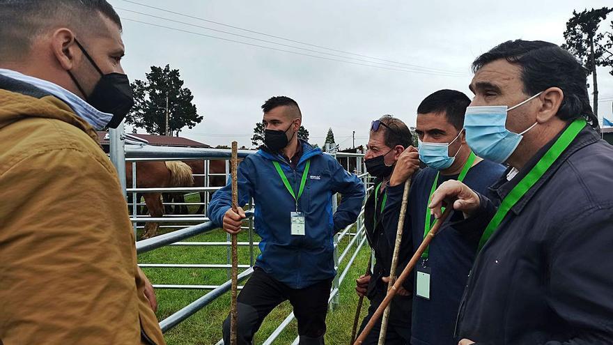 El ganado equino mueve las ventas en el arranque de la feria de San Isidro en Llanera