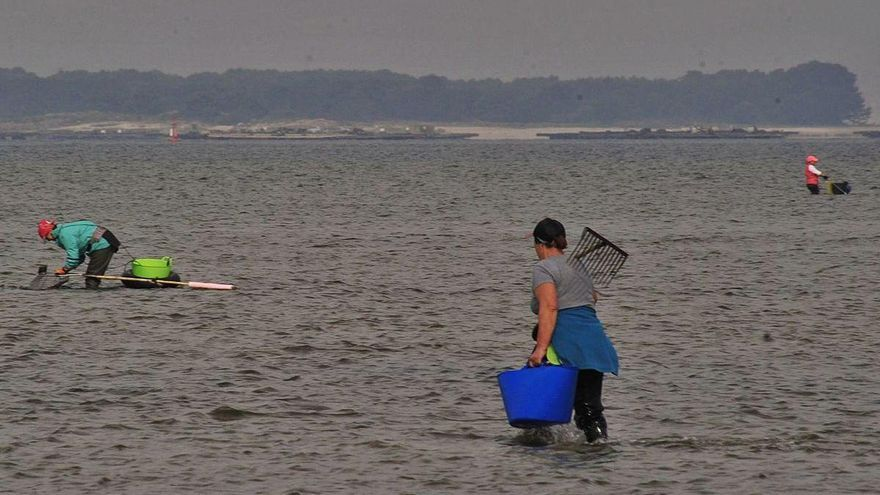 El precio del marisco se derrumba tras la apertura de Noia y agravarse la pandemia