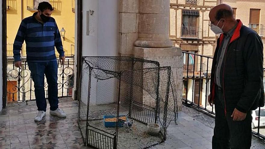 Capturadas 4.000 palomas en Toro para su control poblacional