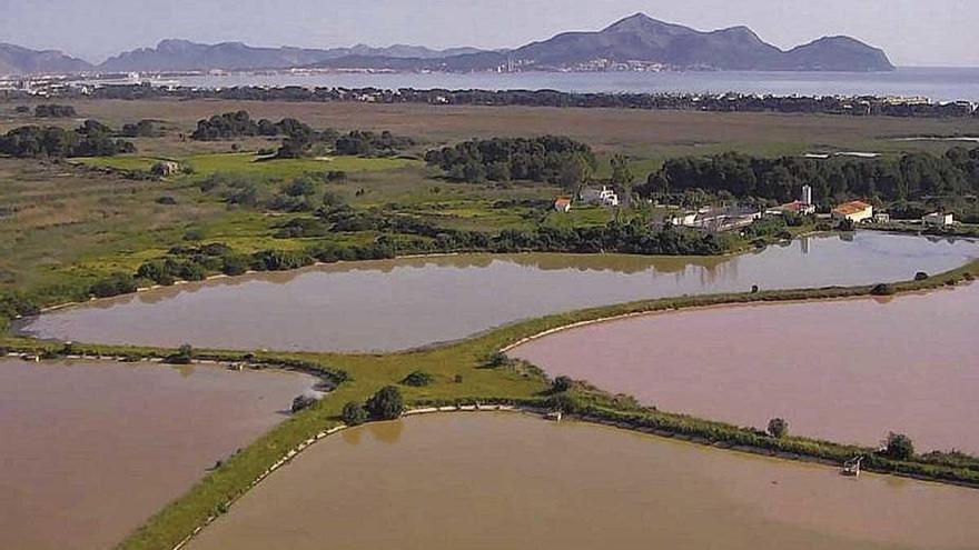 El Govern aboga por seguir gestionando la depuradora de Can Picafort