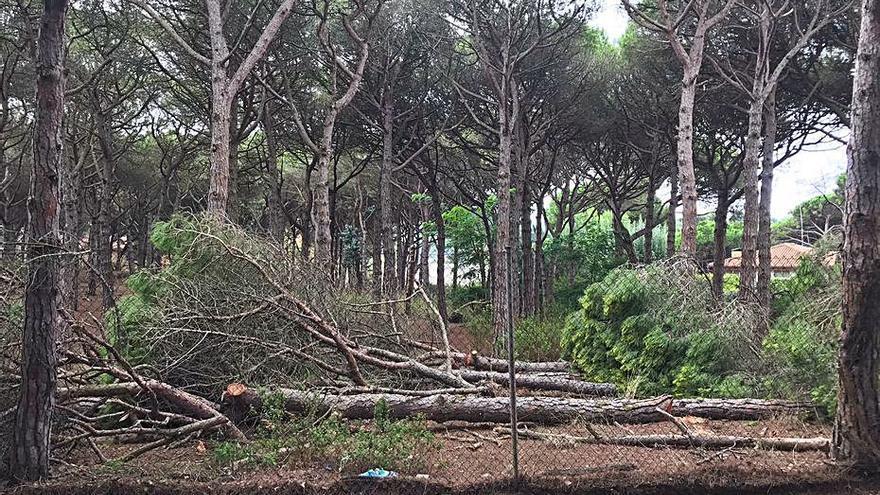 Ecologistes denuncien una tala de pins a la Fosca