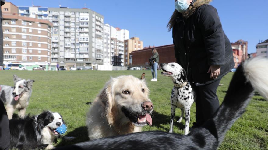 Gijón reagrupará siete zonas para perros en dos y creará una nueva en Pescadores