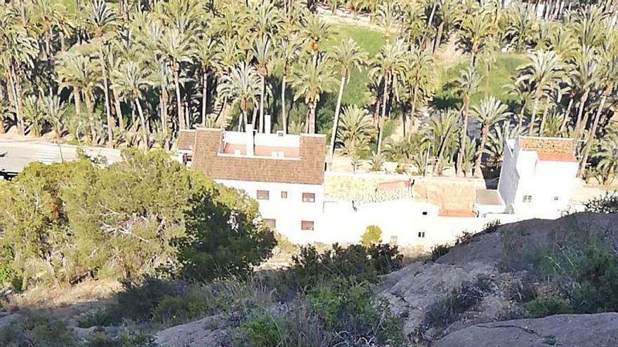 El cactus de Arizona avanza en Orihuela, alcanza el Monte de San Miguel y amenaza al Palmeral