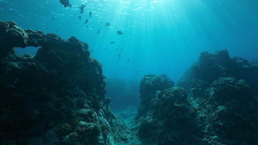 Una fórmula clave para salvar los ecosistemas marinos