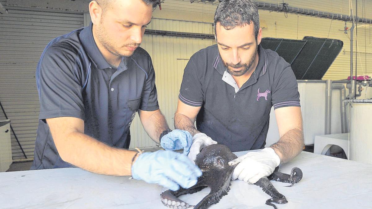Dos trabajadores del Centro Oceanográfico en Canarias durante una de las investigaciones.