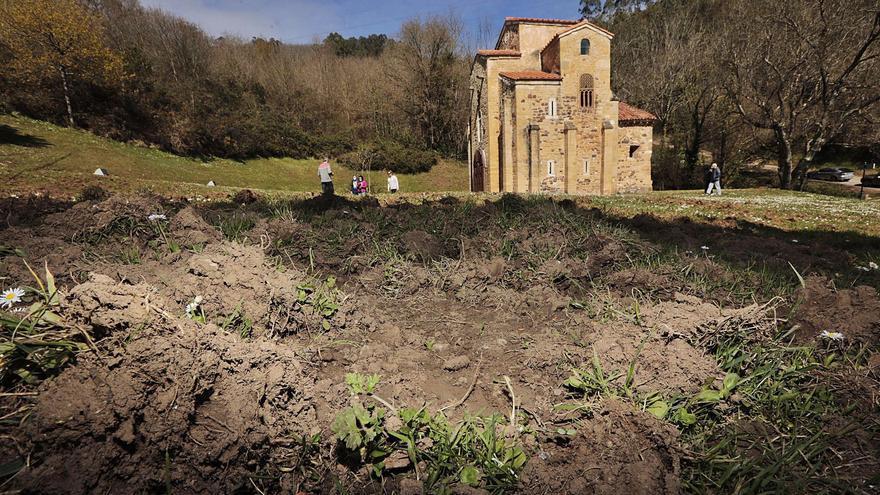 Los jabalíes invaden las joyas del Prerrománico de Oviedo: los destrozos de los suidos rodean San Miguel de Lillo