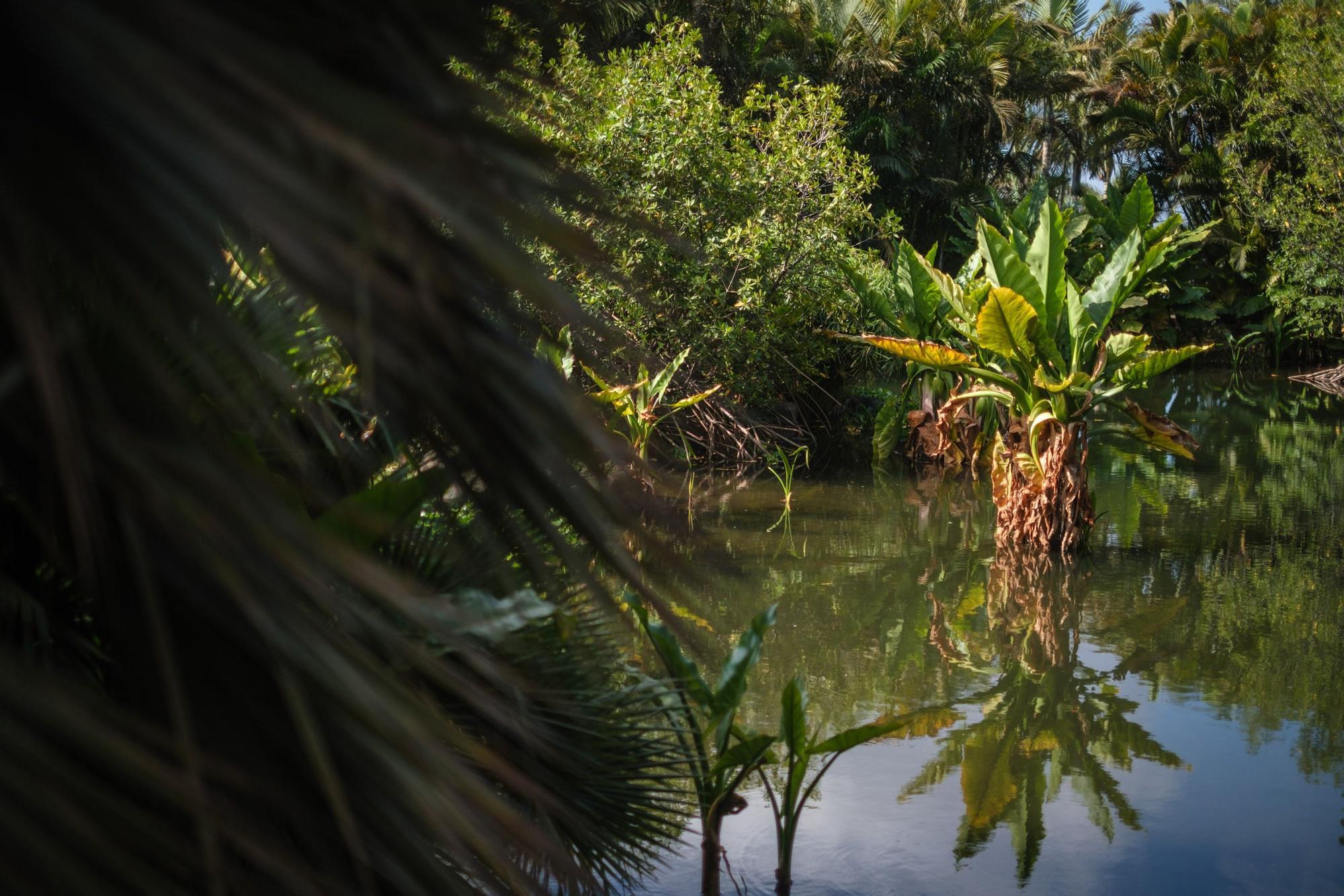 Reportaje Palmetum de Santa Cruz de Tenerife