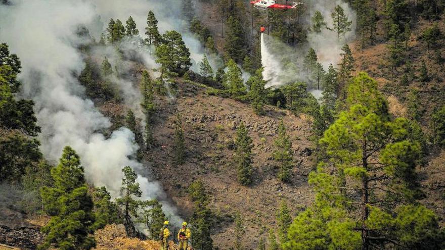 El incendio forestal afecta a más de 3.300 hectáreas del pinar de Arico