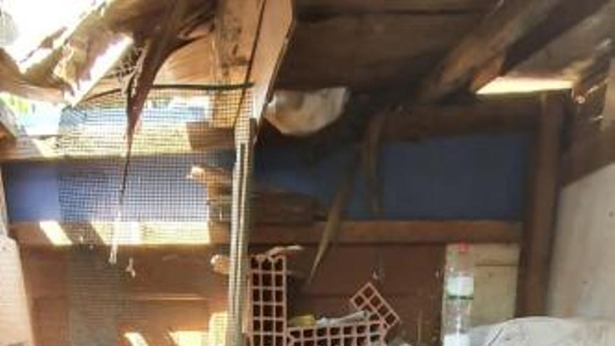 Desmantelan en València una gallera con 15 gallos malheridos en peleas ilegales